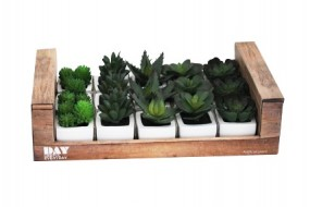 Deko Pflanze Sukkulenten im Topf 5-fach sort. im Display